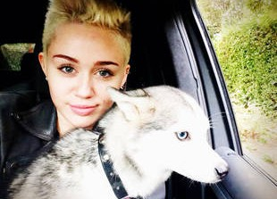 How Did Miley Cyrus\'s Dog Floyd Die? 3 Weird Fan Questions, Answered