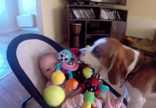 Dog Apologizes to Baby For Toy Thievery in the Cutest Way Possible (VIDEO)