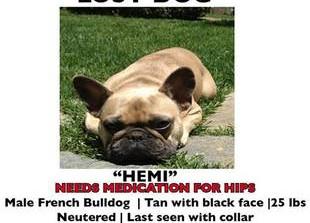Help Jeremy Renner Find His Lost Dog (UPDATE)